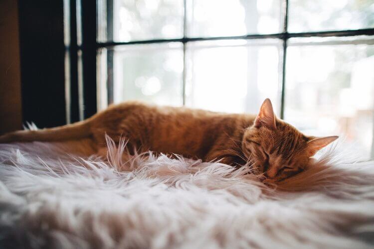 la sieste pour éviter la fatigue liée au cancer