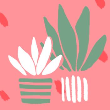 Aloe vera : la plante magique qui hydrate et apaise votre peau fragilisée